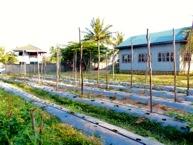 EDM veg garden front