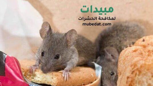 مكافحة الفئران شرق الرياض