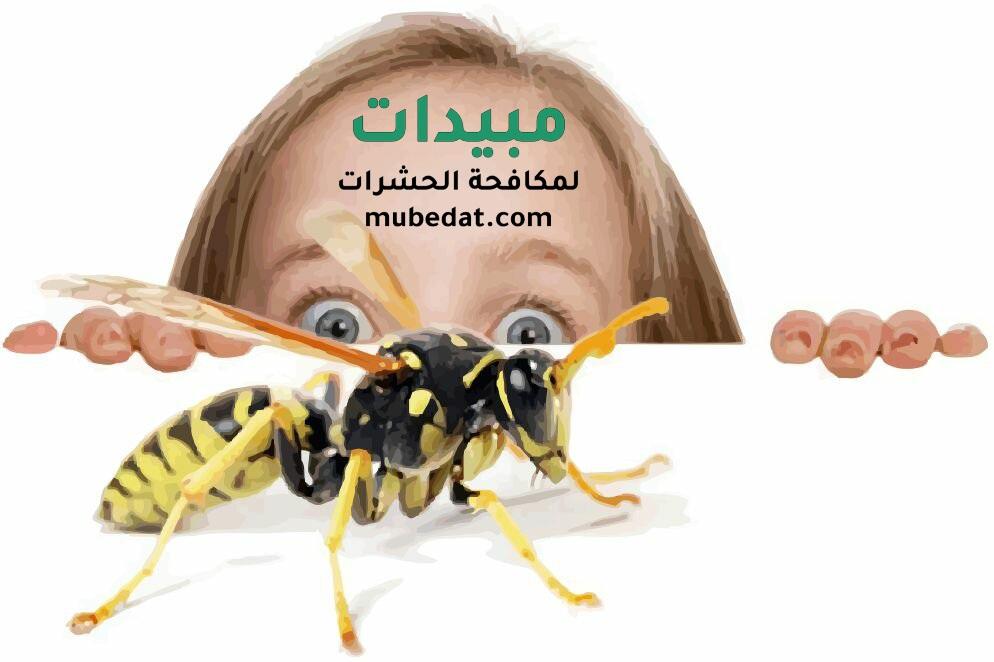 خطورة الحشرات المنزلية