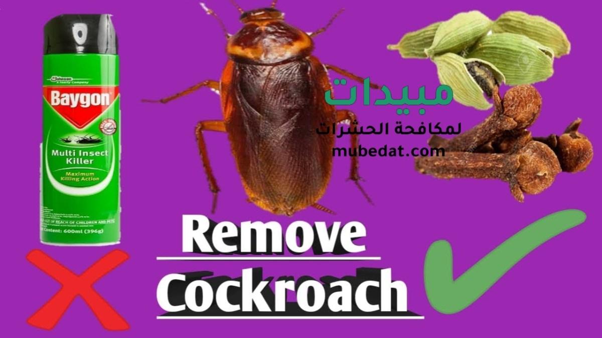 الطرق الطبيعية لـ مكافحة الصراصير