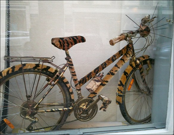 Cat bike in window; pic; Cynthia Rose