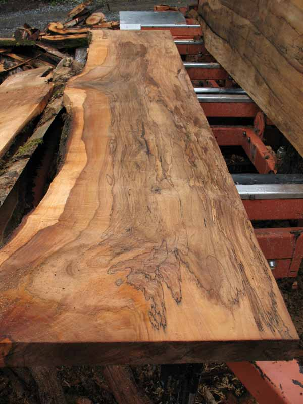 Spalted Figured Maple Live Edge Slabs for Sale at Andys
