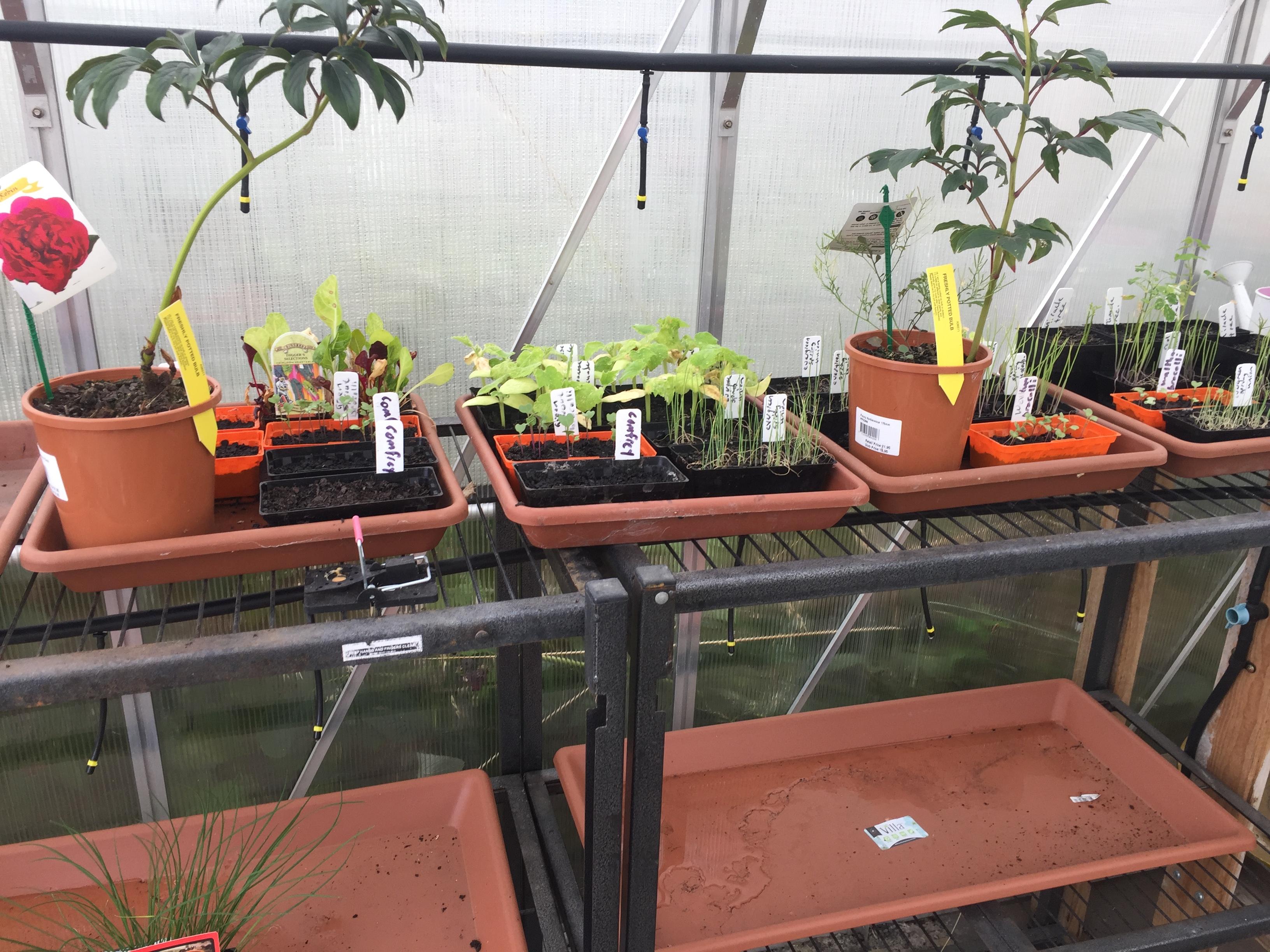 Greenhouse – seedlings