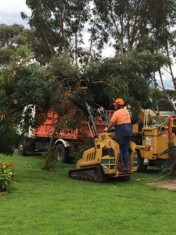 Dreamland tree mulching