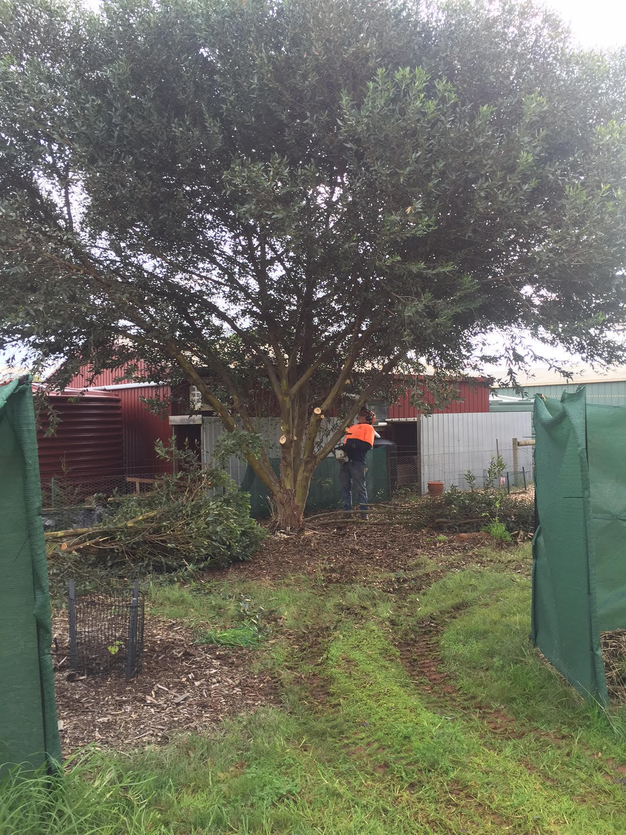 Corner – Wayne clearing Eucalyptus