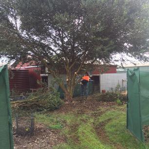 Corner - Wayne clearing Eucalyptus
