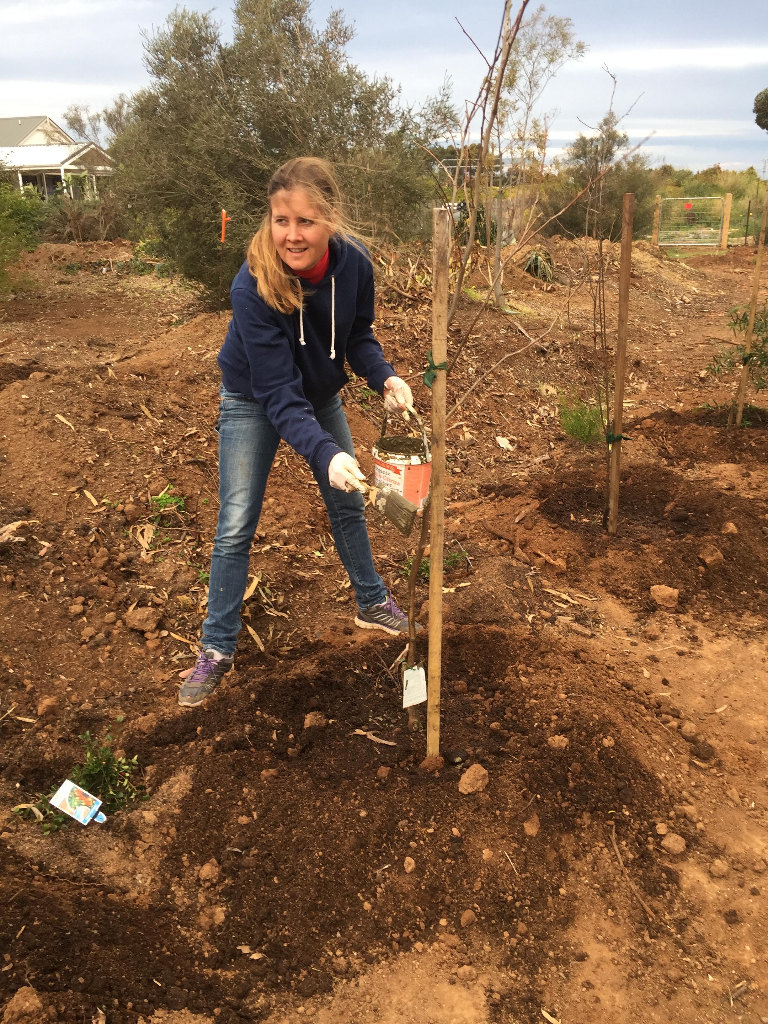 Patricia applying biodynamic tree paste
