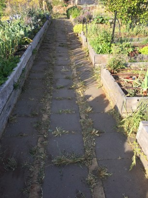 Vegetable patch cleared