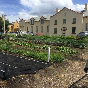 Vegetable beds at Hobart City farm with the art precinct in the background