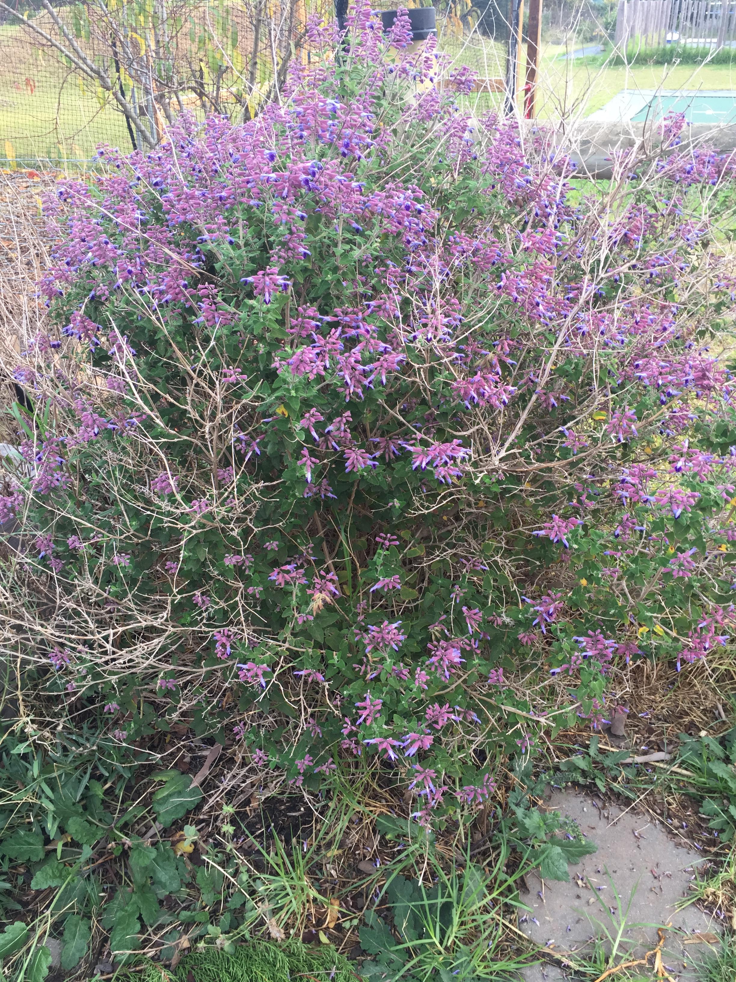 Fall – purple