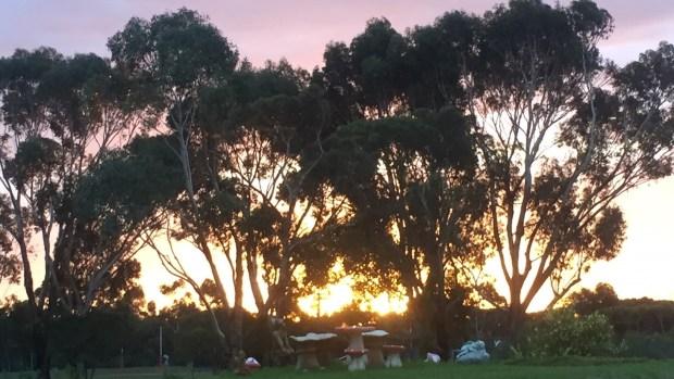 fall - sunset