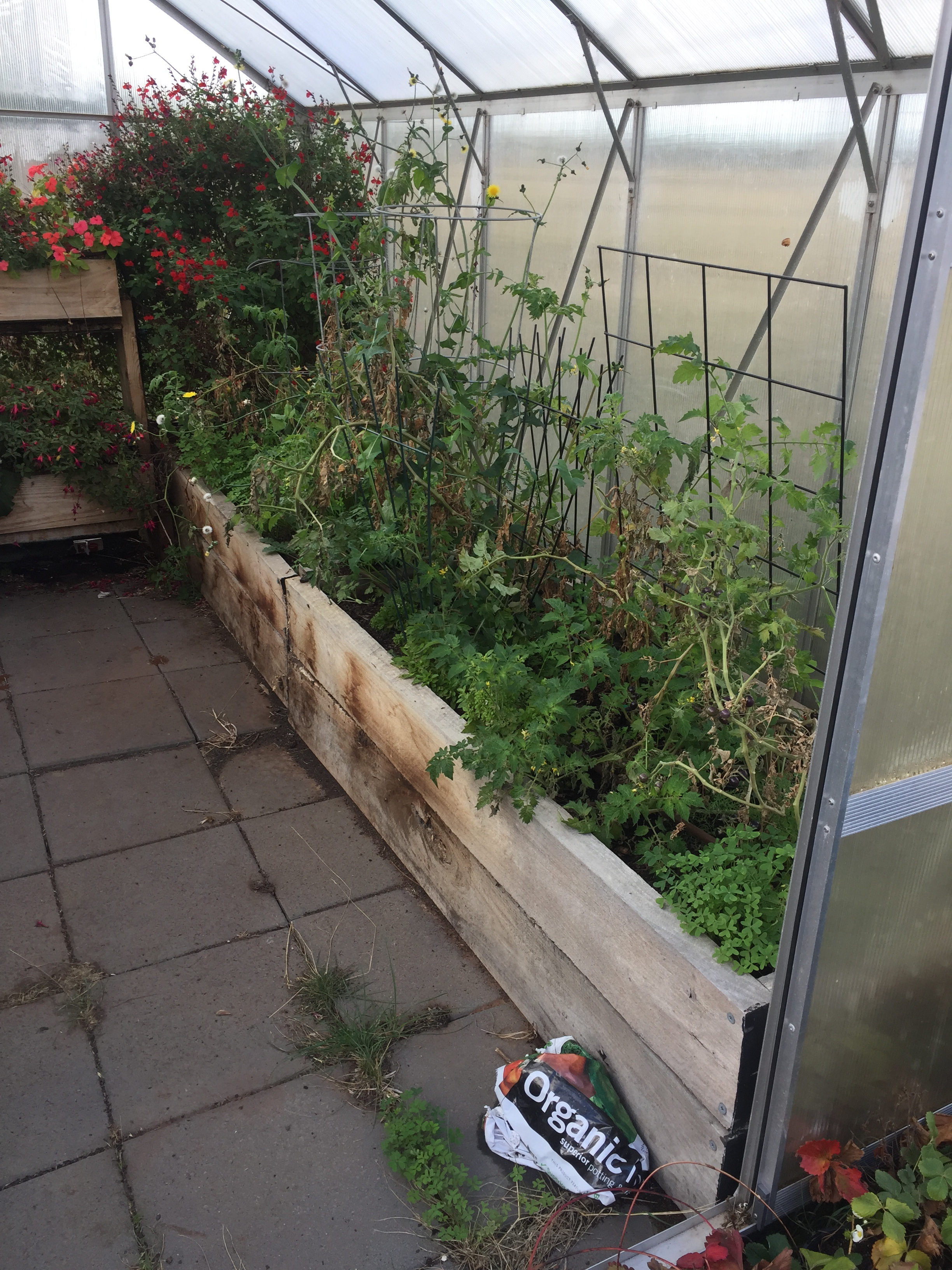 SBGH – Greenhouse bed