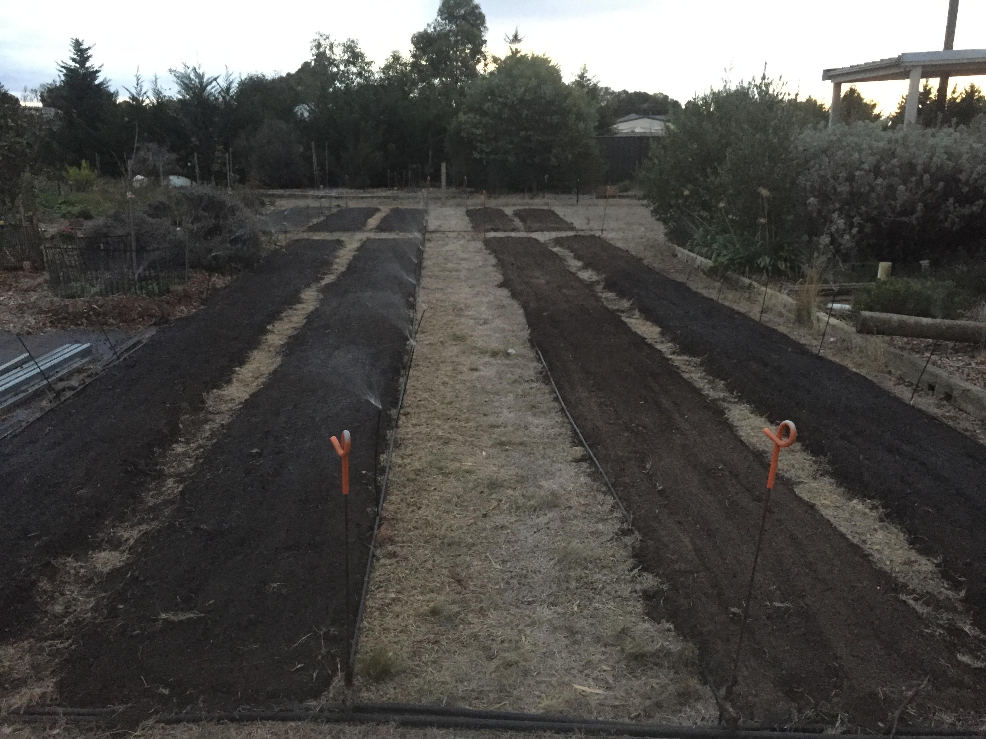 Veg – irrigation