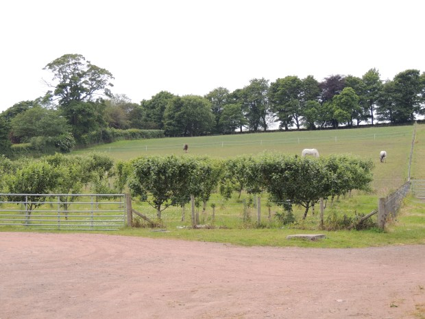 Apple orchard and horses