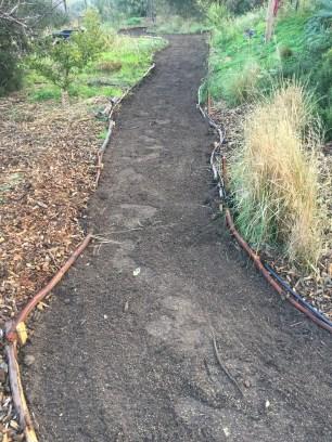 Path3 - planted