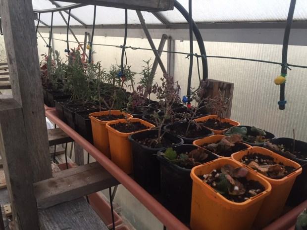 SBGH - new shelf planted