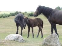 Dart - ponies 2