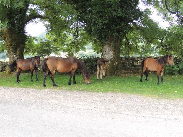 Dart2 - ponies 6