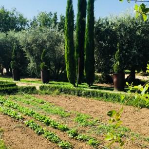 LM veg cyprus