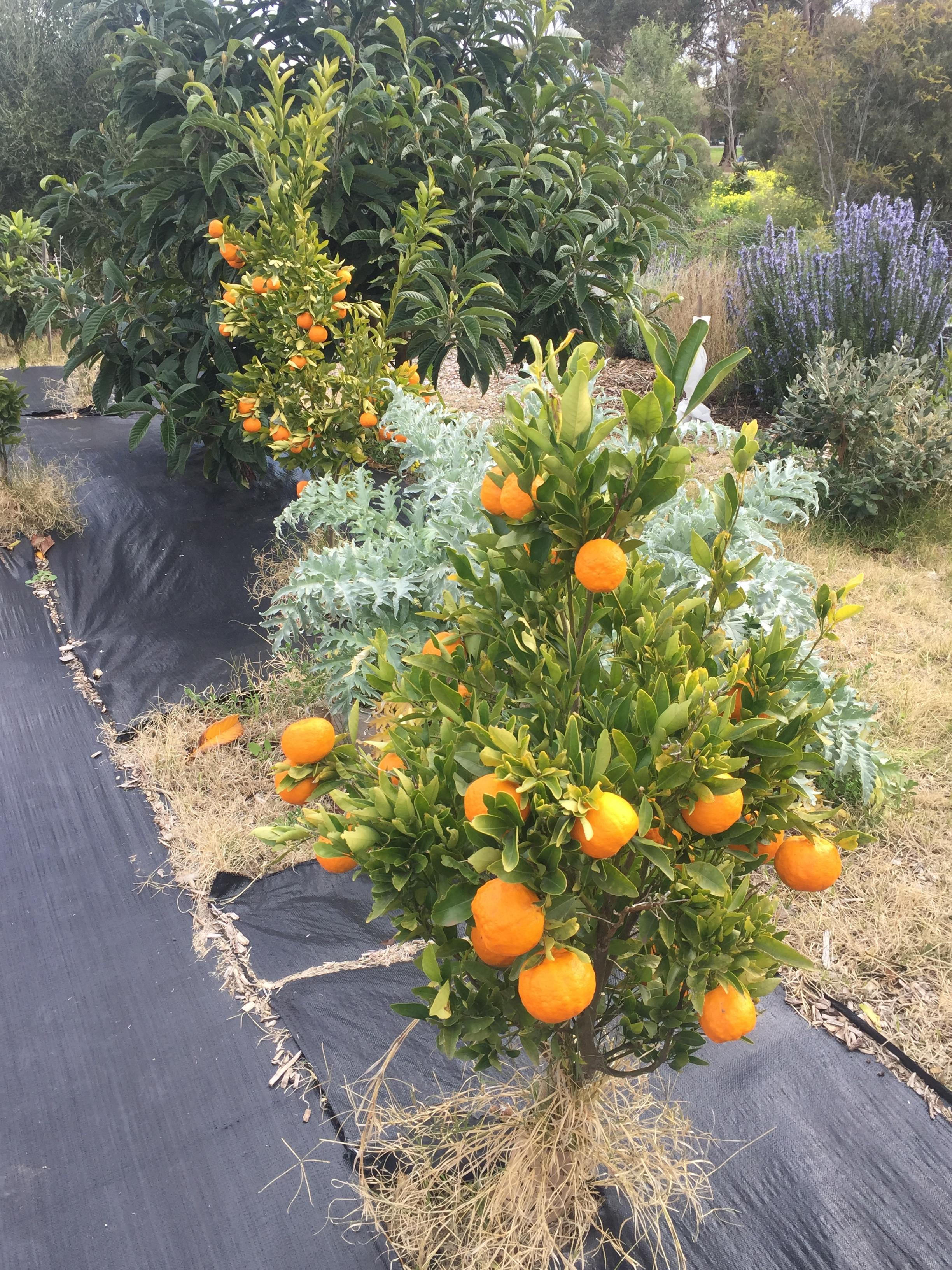 Grind – citrus