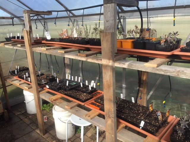 Spring – greenhouse