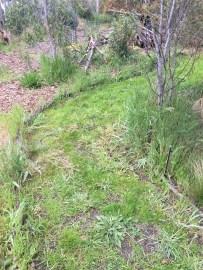 SFix - narrow path 2