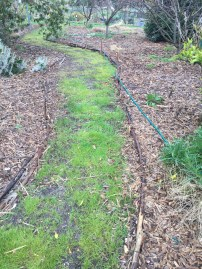 SFix - narrow path 3