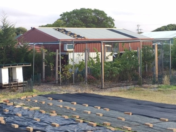 Grapes - new vineyard with shed