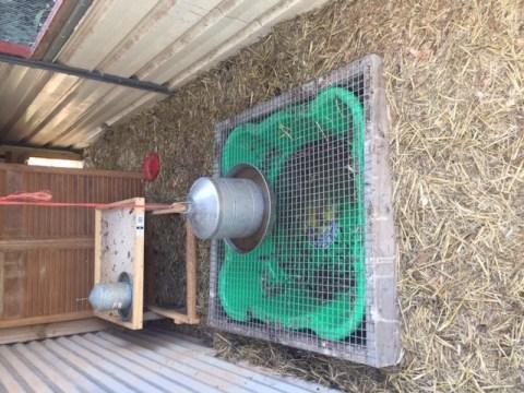 Coop hygiene – duck drainage