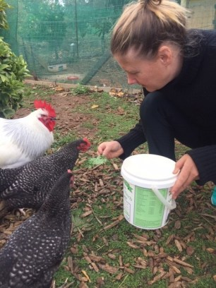 Veg upd - feeding chooks