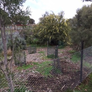 Chookproof- rooster fence 4