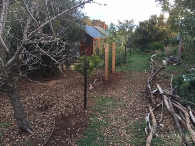 Chookproof- rooster fence start