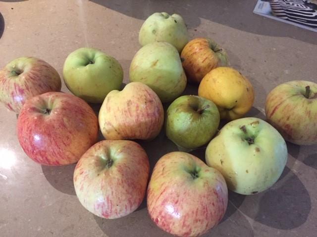 NB1 – Apples