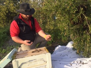 Bee - Sam saving swarm 1