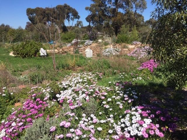 Bee food – wild flowers