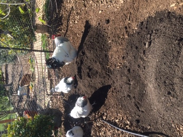 Frame - Sunny and team spreading compost
