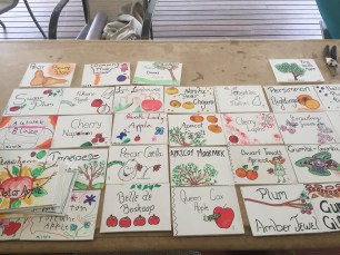 Sign - tree name boards