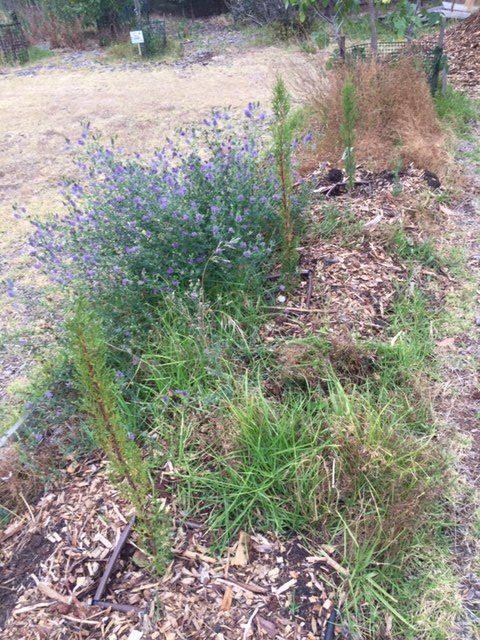 Dry plant 2