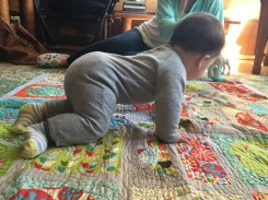 up on all fours! trying to crawl