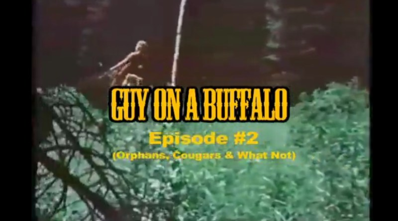 Guy on a buffalo