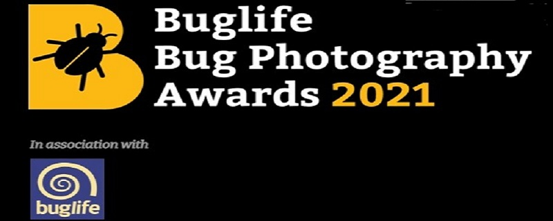 The Bug Photography Awards 2021: (Deadline 5 September 2021)