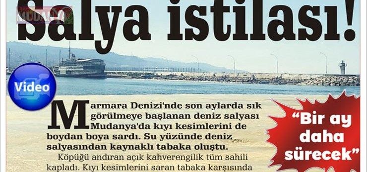 Mudanya sahillerinde deniz salyası istilası