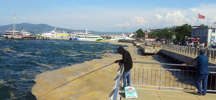 Mudanya kıyılarında müsilaj yeniden yoğunlaştı