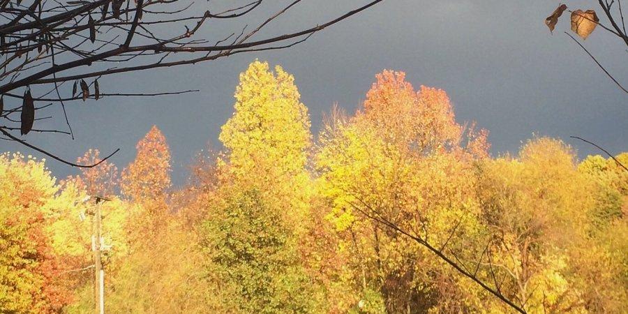 yellow trees and dark gray rain clouds
