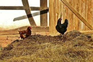Утилизации навоза и куриного помёта