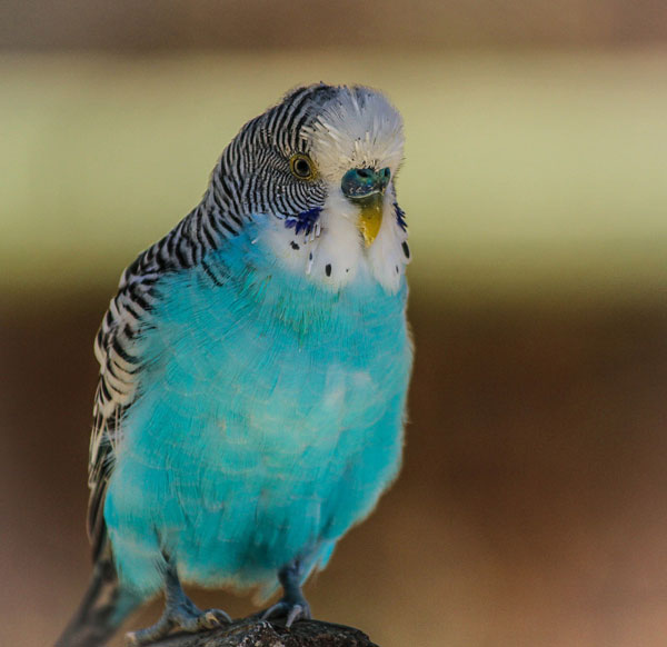 Parakeet-image-Not-Too-Late-For-Your-Dreams