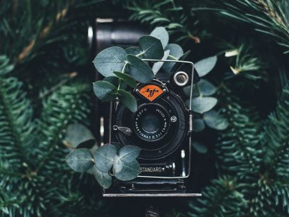 camera surrounded by greenery