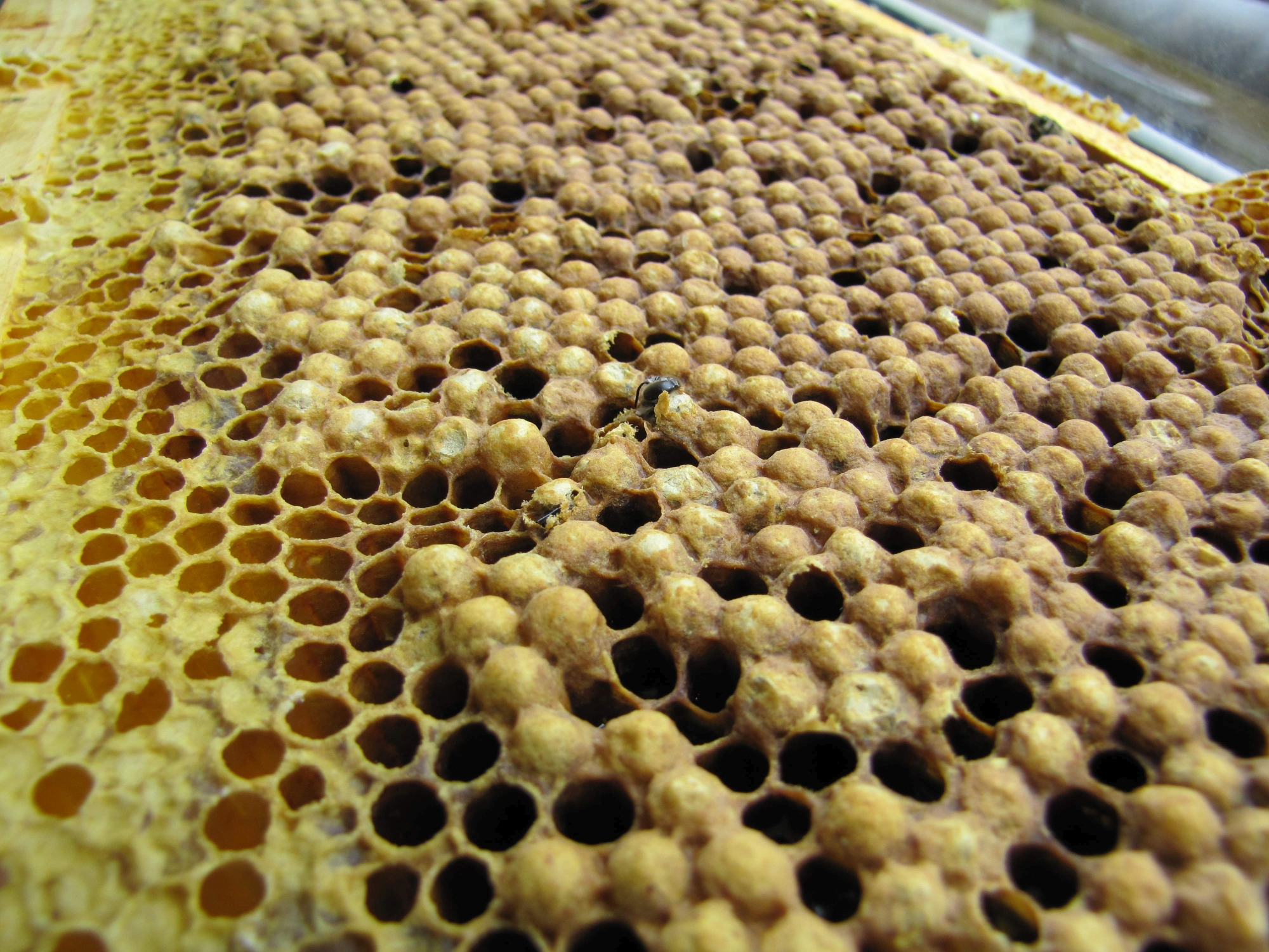 Is Foundationless Beekeeping a Good Idea for Cold Climate