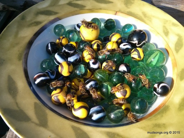 Honey bees drinking water from a bowl full of marbles. (August 28, 2015.)