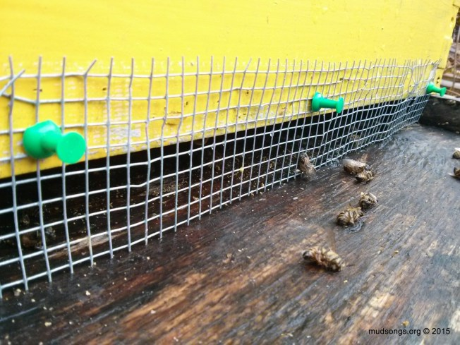 Three green pushpins (instead of staples) used to attach mesh over bottom entrance. (Dec. 13, 2015.)